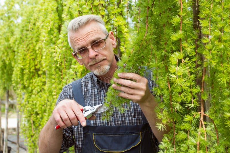 De tuinman snijdt de struikenscharen royalty-vrije stock afbeeldingen