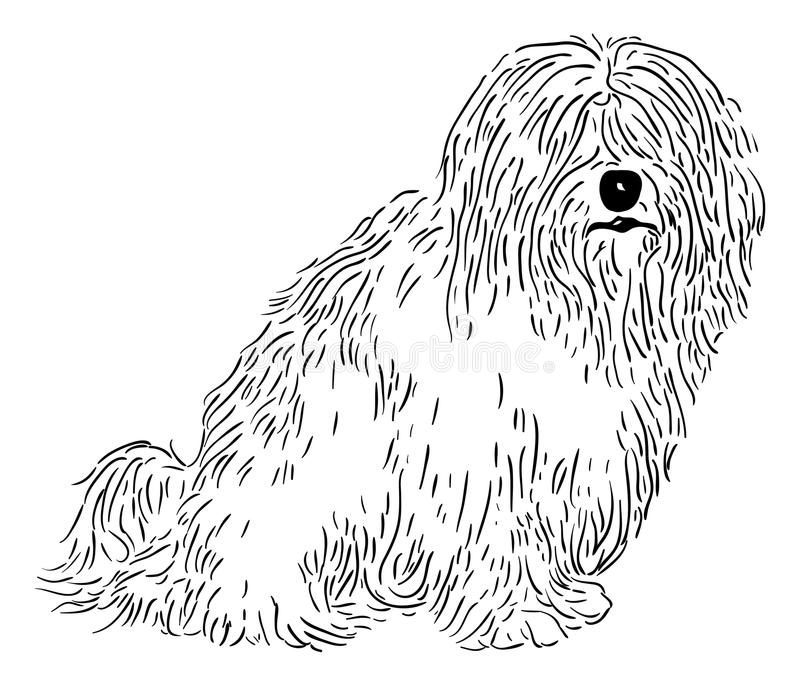 de tulear bawełny royalty ilustracja