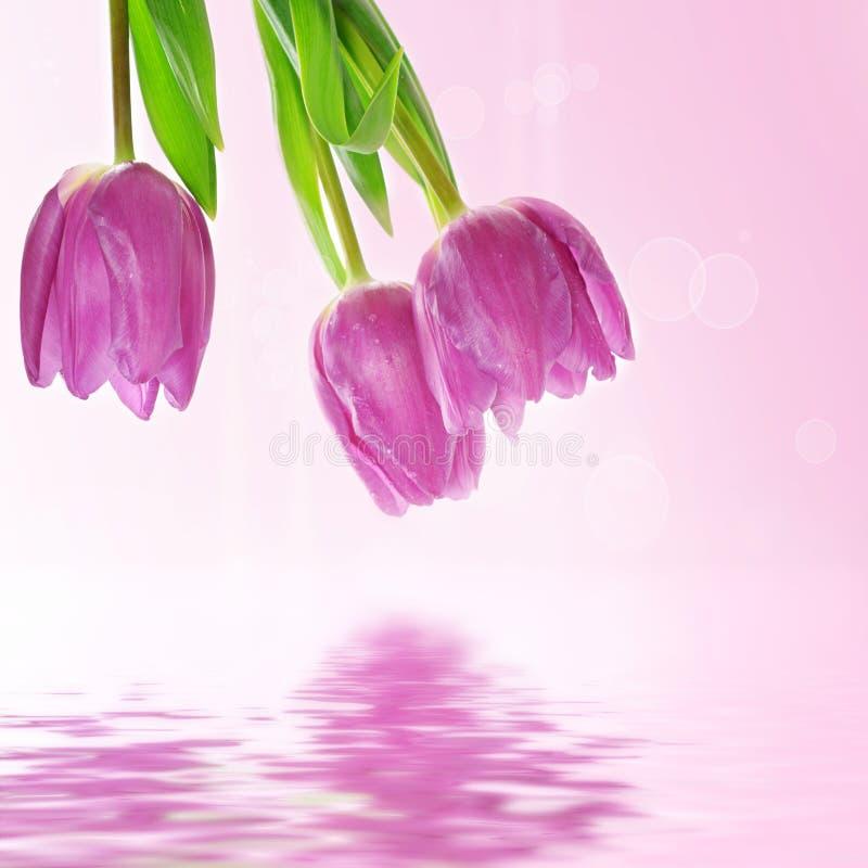 De tulp bloeit achtergrond royalty-vrije illustratie