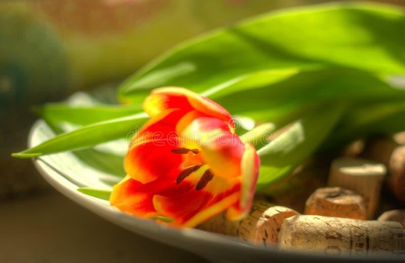 De tulp in kurkt stock afbeelding