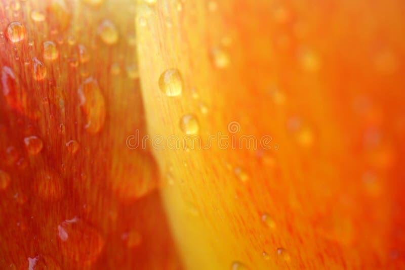 De tulpen van het water royalty-vrije stock afbeelding