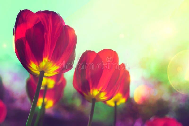 De tulpen van de lente in tuin stock foto