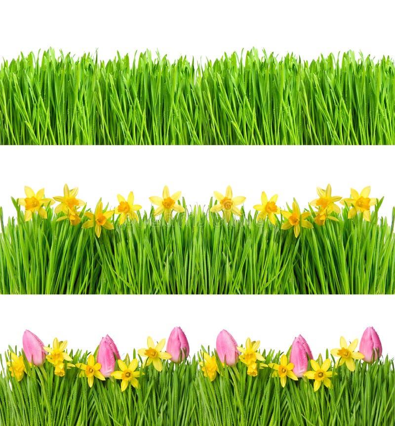 De tulpenbloemen van de lentenarcissen De groene dalingen van het graswater royalty-vrije stock foto's