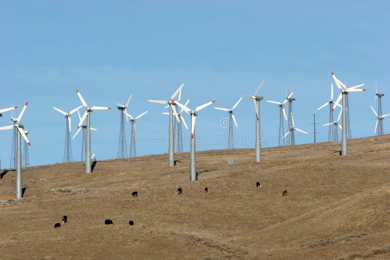 De turbines van de wind - alternatieve energie stock foto's