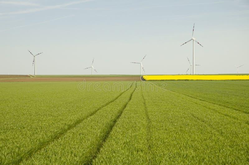 De turbines van de wind en raapzaad fie royalty-vrije stock foto's