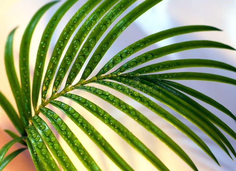 De twijg van de palm stock afbeelding