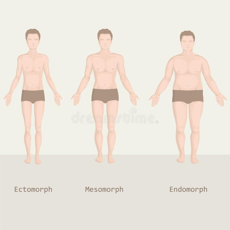De types van mensenlichaam, van vet aan geschiktheid, royalty-vrije illustratie