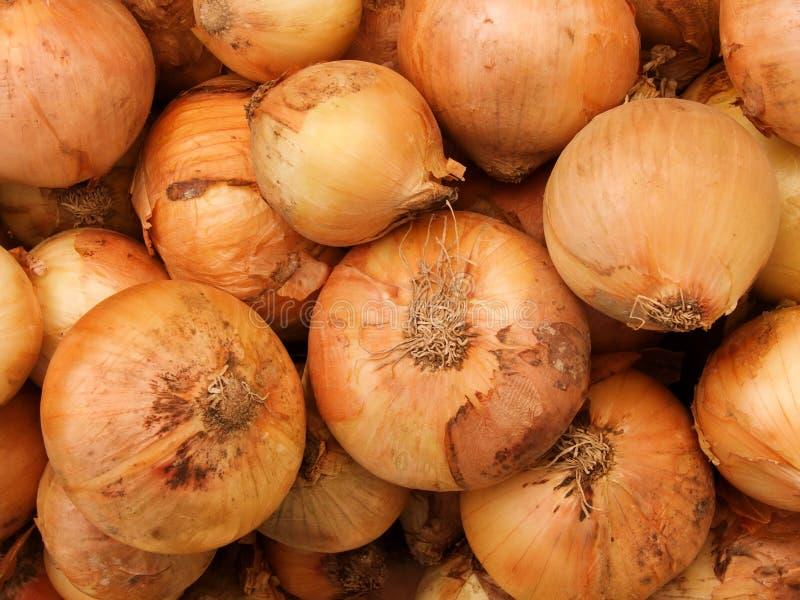 De uien van groenten royalty-vrije stock afbeeldingen
