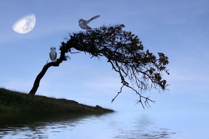 De uilen van de schuur vector illustratie