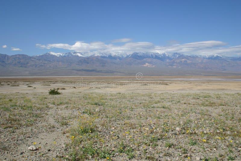 De uitgedroogde woestijn schrobt de Vallei van de Dood royalty-vrije stock foto