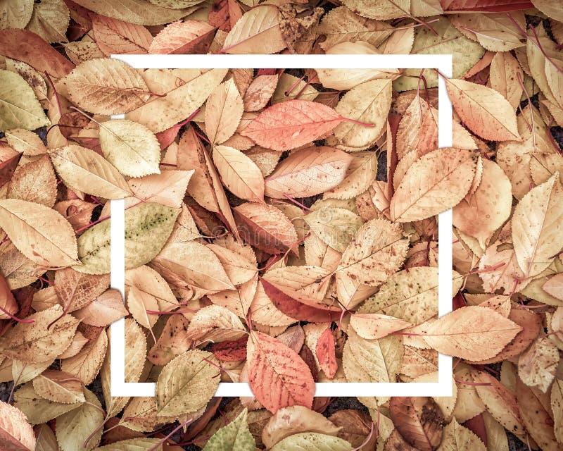 De uitstekende donkere gestemde samenstelling van de herfstbladeren met witte omlijsting De ruimte van het exemplaar De achtergro stock afbeeldingen