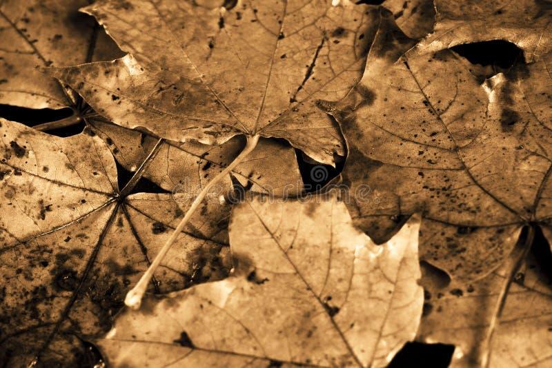 De uitstekende herfst royalty-vrije stock foto's