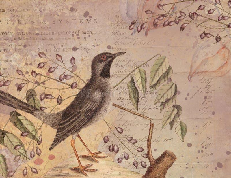 De uitstekende Illustratie van de Waterverfvogel - Collage Achtergronddocument - Verontruste Textuur - Biologie stock illustratie