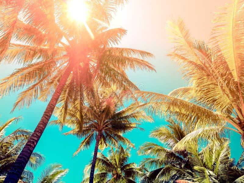 De uitstekende kokospalm van de toonstijl op het strand royalty-vrije stock foto