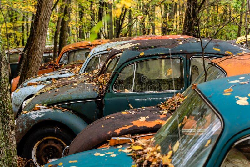 De uitstekende Oldtimer - Autokerkhof in de Herfst - verliet het Type 1/de Kever van Volkswagen - Pennsylvania royalty-vrije stock afbeeldingen