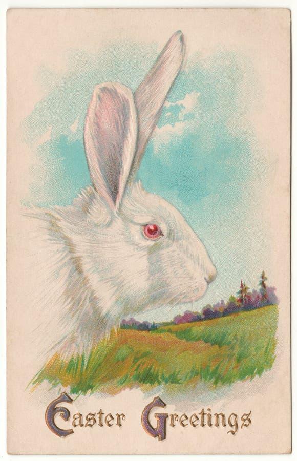 De uitstekende Pasen-Prentbriefkaar van het Groeten Witte Konijn royalty-vrije stock foto's