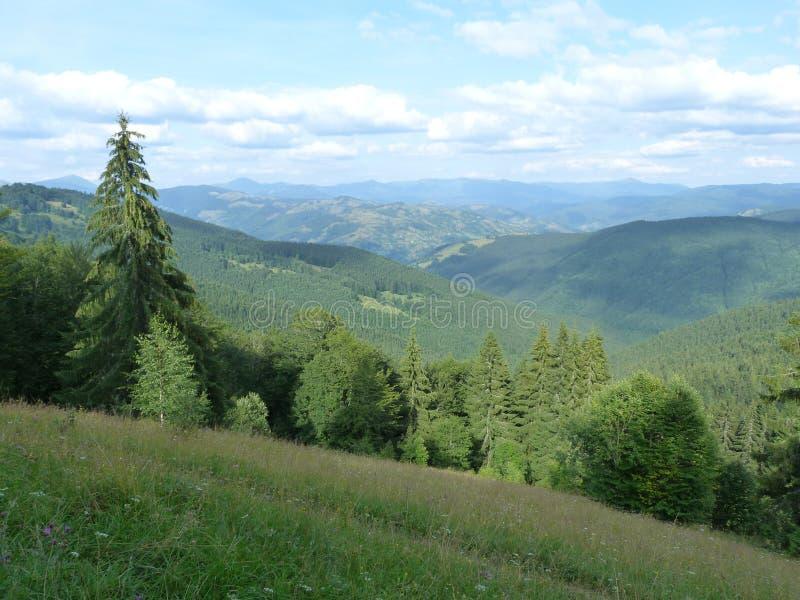 De ukrainska Carpathiansna arkivbilder