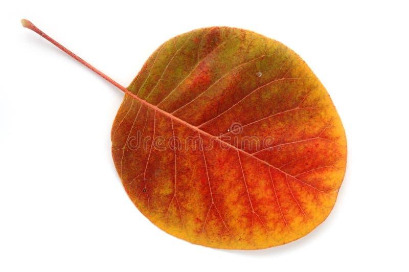 De uma série: folha do outono? fotos de stock royalty free
