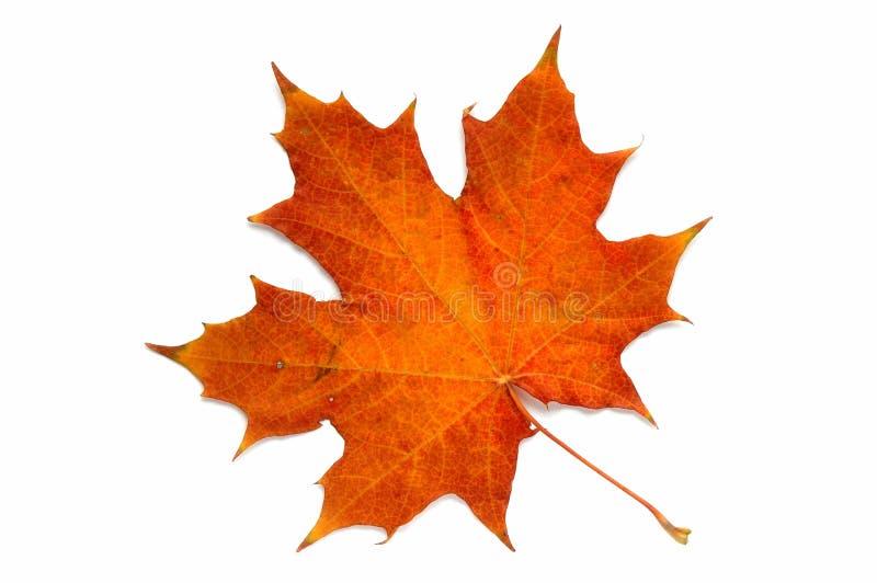 De uma série: folha do outono? imagens de stock