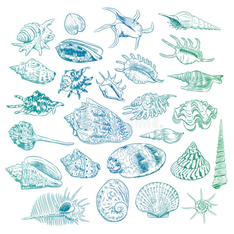 De unieke museuminzameling van overzeese shells zeldzame bedreigde species, het Venus van weekdierenbivalvia kamt murex Corculum- vector illustratie