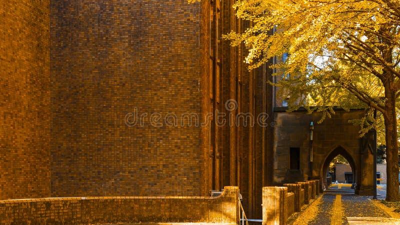 De Universiteit van Tokyo in de Herfst stock foto
