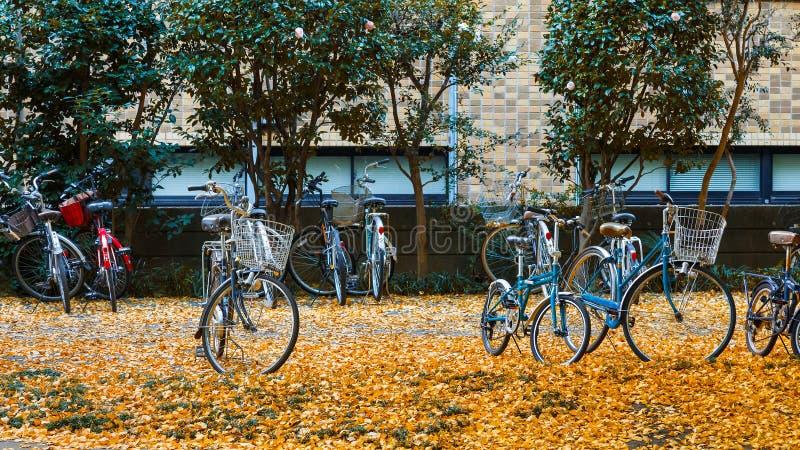 De Universiteit van Tokyo in de Herfst stock afbeelding