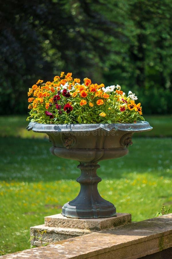 De vaas van de tuinbloem stock foto