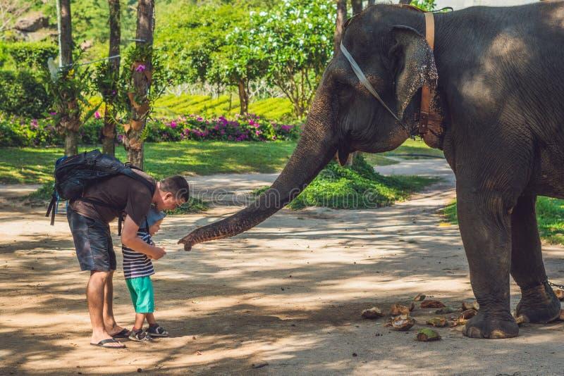 De vader en de zoon voeden de olifant in de keerkringen stock foto's