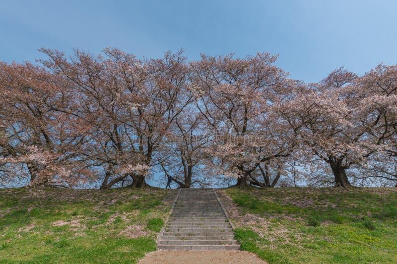 De vader heft op kind in de sakuratuin op De lente van Japan royalty-vrije stock foto