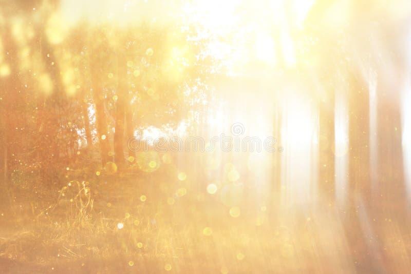 De vage abstracte foto van licht barstte onder bomen en schittert bokeh lichten gefiltreerd beeld en geweven royalty-vrije stock foto's