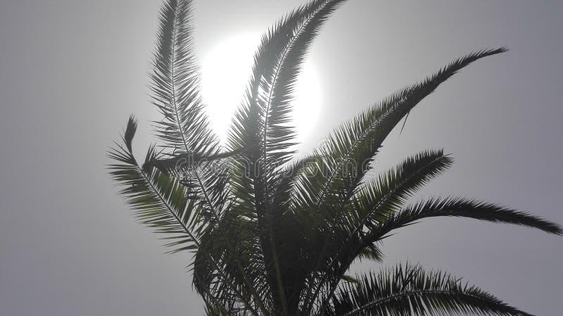 De vakantie als thema heeft - Palm in volledige zon - hemelmening van de palm royalty-vrije stock fotografie