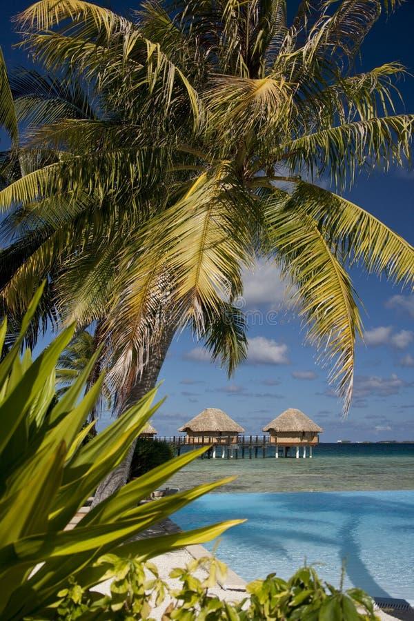 De Vakantie Van De Luxe - Franse Polynesia Royalty-vrije Stock Afbeeldingen