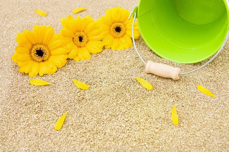 De vakanties van de zomer bij het gouden strand royalty-vrije stock fotografie
