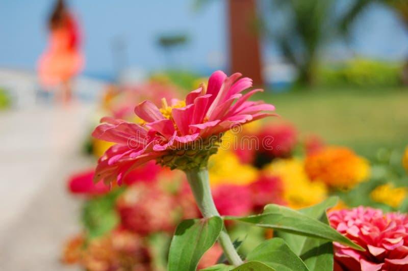 De vakanties van de zomer - boeiende bloem en een meisjessilhouet stock foto's