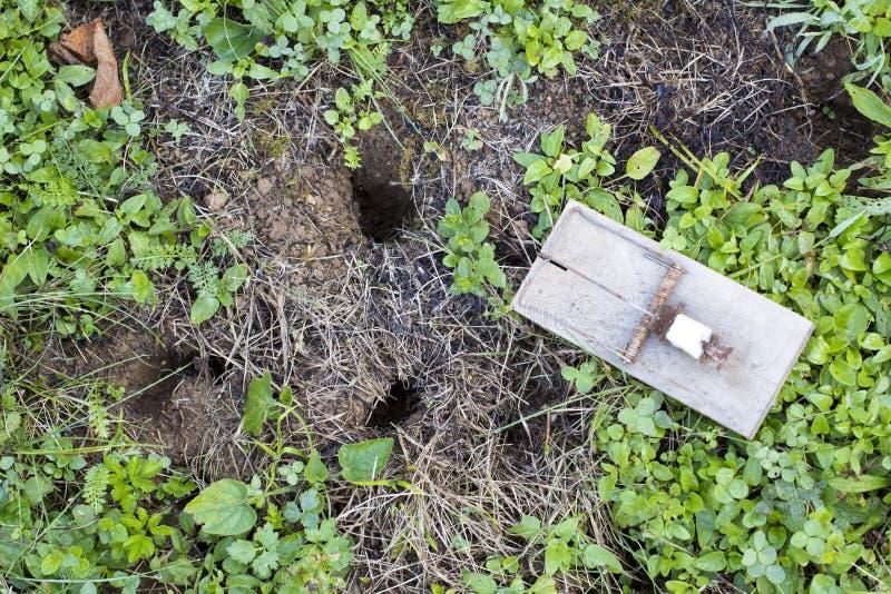 De val van de muis op tuingazon stock fotografie