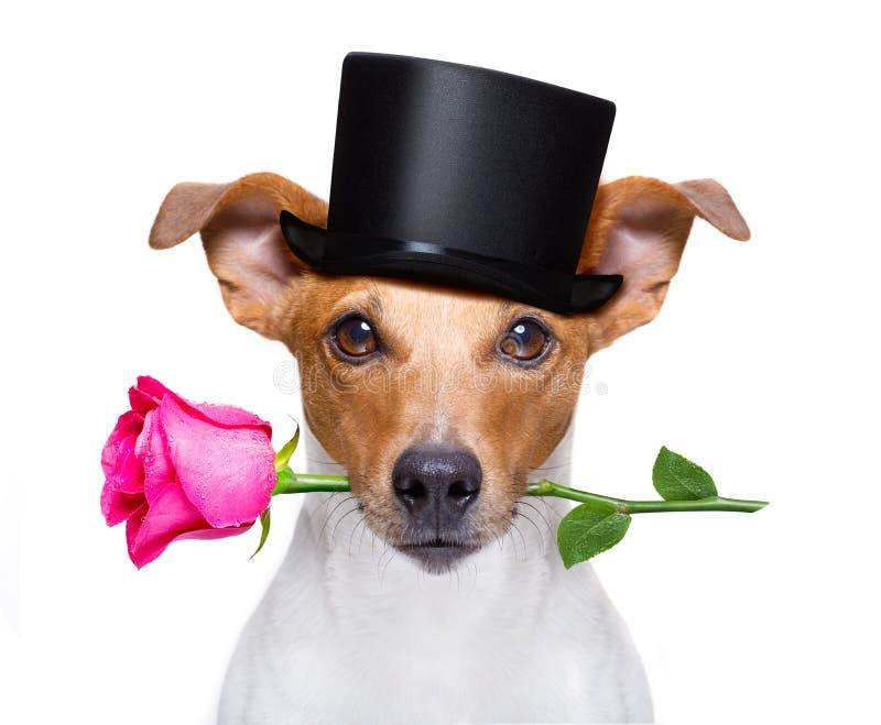 De valentijnskaartenhond met nam toe stock foto