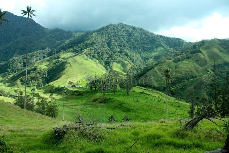 De vallei van Cocora, de Andes, Colombia stock afbeelding