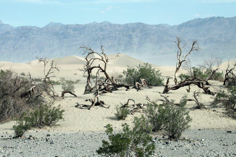 De vallei van de dood stock foto's