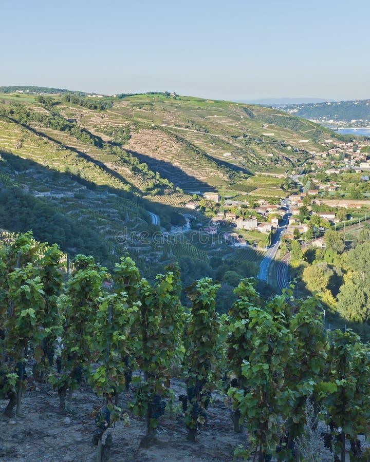 De Vallei van de Rivier van de Rhône dichtbij Wenen royalty-vrije stock foto's