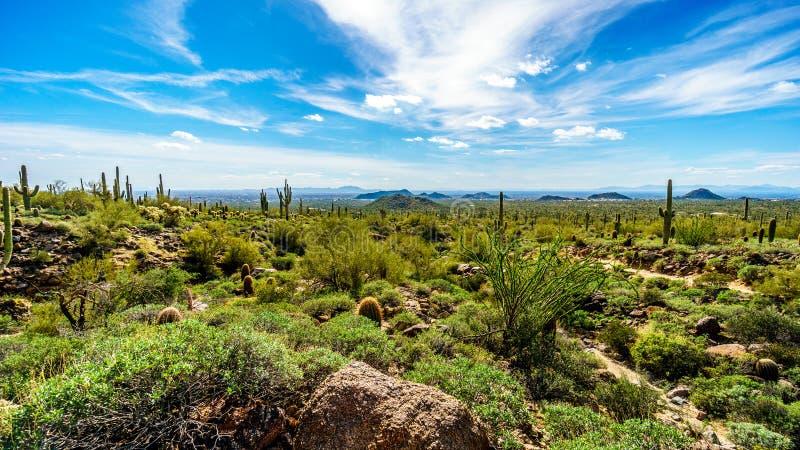 De Vallei van de Zon met de stad van Phoenix van Usery-het Park dat van Bergreginal wordt bekeken stock fotografie
