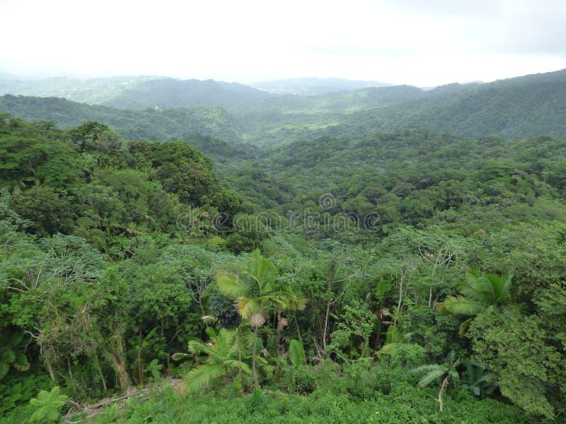 De Vallei van Gr Yunque royalty-vrije stock afbeelding