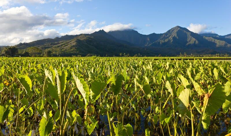 De Vallei van Hanalei in Kauai stock afbeeldingen