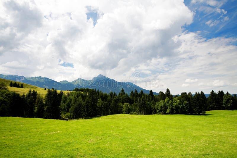 De vallei van het gras in bos royalty-vrije stock afbeeldingen