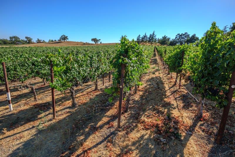 De Vallei van wijngaardnapa royalty-vrije stock afbeelding