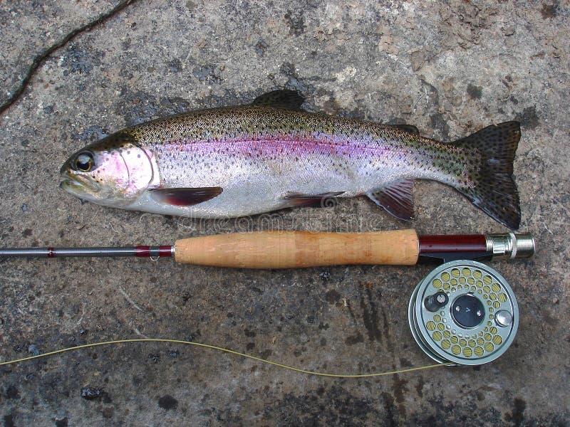 De vangst, de Vissen van de Forel van de Regenboog stock afbeelding