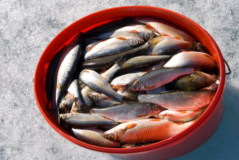 Download De vangst van de winter stock foto. Afbeelding bestaande uit vers - 10775626
