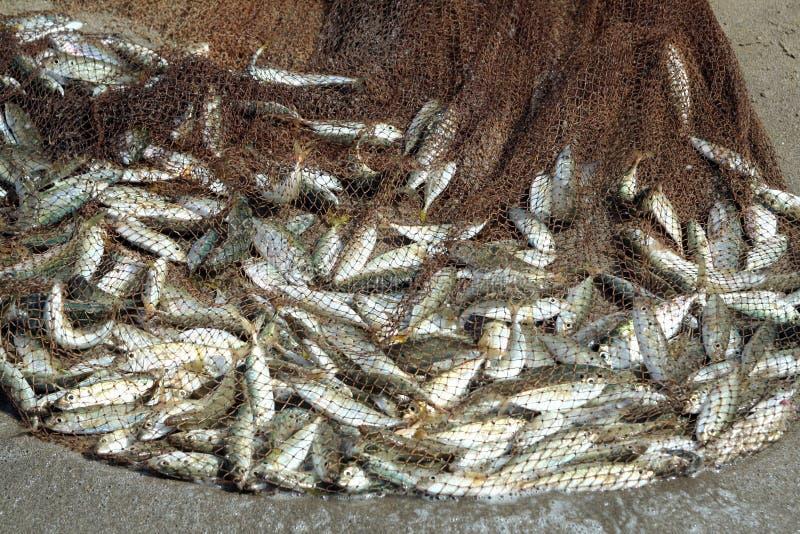 De vangst van vissen stock fotografie