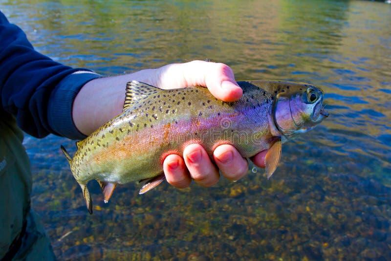 De Vangstversie van de regenboogforel stock fotografie
