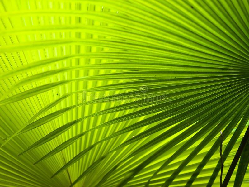 De Varenbladen van de palm royalty-vrije stock afbeelding