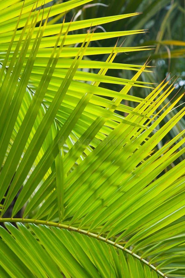 De varenbladen van de palm royalty-vrije stock fotografie